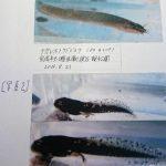 8月21日(日)武庫川渓谷観察会レポート(法西浩の活動記録)